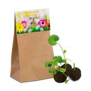 Топчета от летни цветни семена за засаждане