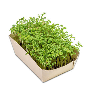 Градинка от микрорастения